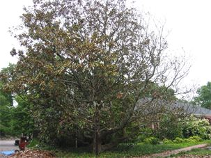 Sick trees in Nashville- let us help you with your tree health.